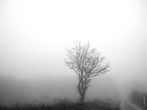 El espíritu del bosque