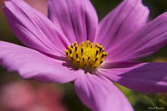 Fleur (Alison Bautier Photographies) Tags: flower macro fleurs canon alisonbautier