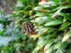 """Huge Brown Spider on web • <a style=""""font-size:0.8em;"""" href=""""http://www.flickr.com/photos/34843984@N07/15359930929/"""" target=""""_blank"""">View on Flickr</a>"""