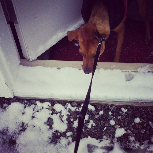 Oh hell no #snow #YKstorm #yxy #Yukon