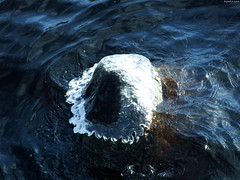"""Rippled Icecap on Rock • <a style=""""font-size:0.8em;"""" href=""""http://www.flickr.com/photos/34843984@N07/15401961456/"""" target=""""_blank"""">View on Flickr</a>"""