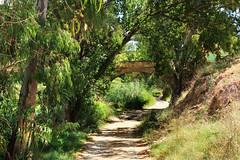 IMG_1187 Old path No 1 (jaro-es) Tags: light españa verde green luz nature canon licht spain camino path natur natura grün landschaft spanien weg naturesfinest spanelsko naturewatcher eos70d naturemaster