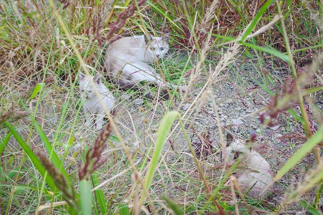 Today's Cat@2014-10-01