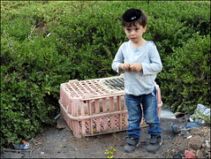 Kapparot (ggy130@rocketmail.com) Tags: chicken israel child cage judaism brak bnei kippa kipur kapparot