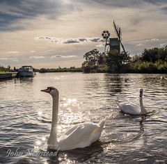 Swans at How Hill wind pump (johnnewstead1) Tags: river ant hill norfolk olympus swans how omd em1 johnnewstead mzuiko