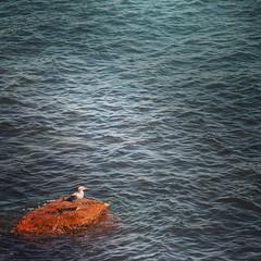 Divisando el mar #gaviota #mar (Living In Pixels) Tags: square squareformat unknown iphoneography instagramapp uploaded:by=instagram