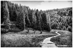 Una Vita in Salita (Johnnykeyboard (www.sergioparini.com)) Tags: trees mountain alberi blackwhite path sentiero montagna biancoenero walkin camminare orizzontale