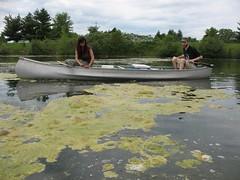 Sampling Filamentous Algae