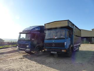 P1040198. SN05 MGO  R656 WDC Mercedes Livestock transport