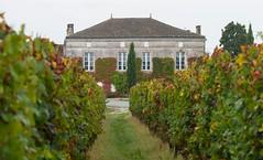 Vendanges au Château Fougas 2014 11
