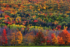 Fall Patchwork...II (sminky_pinky100 (In and Out)) Tags: autumn trees canada fall colours novascotia foliage colourful fallcolours omot cans2s masterclasselite thenewmasterclass nearwentworthvalley