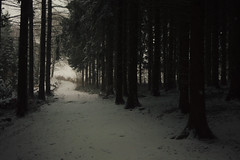 Snow and Fog (Netsrak) Tags: atmosphäre baum bäume eifel februar forst landschaft natur nebel schnebel schnee stimmung wald atmosphere fog forest landscape mist mood nature snow tree trees woods meckenheim nordrheinwestfalen deutschland de winter