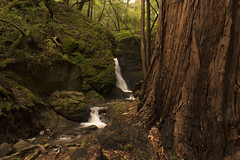 Cascade Falls (so1150) Tags: nikon d810 cascadefalls millvalley 2470mmf28 waterfall redwoods diffusedlight ps6 nik