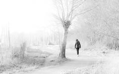 Balade solitaire - Explore (26/02/2017) (david49100) Tags: 2017 cantenayépinard maineetloire arbre bw d5100 février nb nikon nikond5100 tree