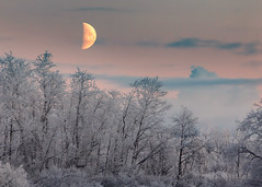 Moonrise and Frosted Arctic Birch Trees (Oliver C Wright) Tags: arctic birch moon moonrise