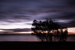 Streaks (Photos By Chris) Tags: clouds sunset streaks tree sillouette barmera sa southaustralia outback