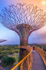 Bridge in the sky (jaywu429) Tags: people outdoor marinabay marinabaysg tree building urban sony1635mm sonya7r sony clouds shn skyline sky bridge architecture landscape supertree gardensbythebay singapore