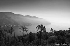 fog (MartinEden83) Tags: italy italia liguria monterosso mare sea nebbia alberi