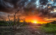 Golden Hour (DonMiller_ToGo) Tags: hdr 5xp sunsetmadness hdrphotography nature onawalk sunsets sky sunsetsniper goldenhour d810 outdoors florida