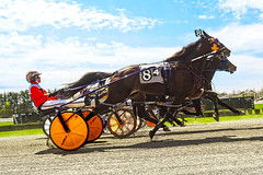 And They're Off (vodophoto's images) Tags: olympus mirrorless photography trotters race horse harness track wagering action sports