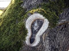 Baumohr (bunkertouren) Tags: natur nature outdoor baum bäume mais maisfeld feld feldweg country blüte blühen schatten naturschauspiel naturereignis acker baumstamm ohr