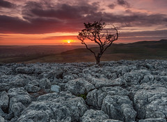 Hawthorn Tree at Sunset, Twistleton Scar,. Yorkshire Dales (MelvinNicholsonPhotography) Tags: twistletonscar yorkshiredales yorkshire hawthorntree tree sunset red orange limestone limestonepavement grey fells hills dales landscapephotography landscapephotographyworkshops melvinnicholsonphotography
