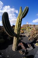 Cactus Garden (Lanzarote) (Carlos (CR 76)) Tags: spain españa canarias canaryisle cactus samyang8mm fujifilm fuji