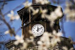 Clock tower (saromon1989) Tags: haskovo bulgaria clock tower clocktower spring blue blossom