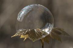 la forêt, en bullant (mars-chri) Tags: forêt larbre lafeuille érable chêne frêne charme hêtre valdoise buller