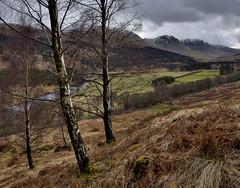 Glen Lyon (mellon93) Tags: scotland glen glenlyon trees mountains birch river