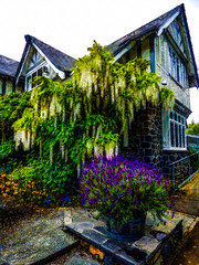 The Curators House in Hagley Park (Steve Taylor (Photography)) Tags: curatorshouse hagleypark wysteria art digital architecture building restaurant house garden window newzealand nz southisland canterbury christchurch flower plant texture
