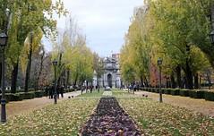 Madrid_0306 (Joanbrebo) Tags: parquedelretiro madrid españa spain park parc parque garden jardí jardín arbol arbre tree gent gente people peopleandpaths canoneos80d efs1855mmf3556isstm eosd autofocus
