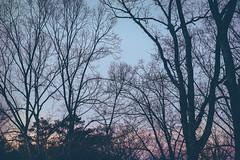 spring 2017-2 (roger.salz) Tags: atlanta sunset buckhead spring