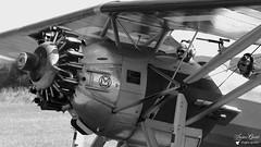 F-AZAH / 254 - Morane Saulnier MS 315 (Laurent Quérité) Tags: moranesaulnier ms315 aviation airshow pierrelatte france canonef100400mmf4556lisusm canoneos7d meetingaérien fazah avion aéronef canonfrance noirblanc blackwhite monochrome aérodromedutricastin