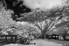 Gef Pa'go Cultural Village, Guam (orgazmo) Tags: guam gefpago blackwhite monochrome landscapes infrared ir irphotography olympus penepl2 epl2 panasonic lumix lumixgxvario1235mmf28