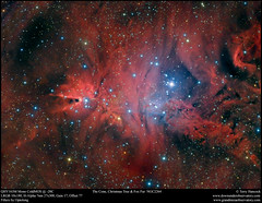 The Cone, Christmas Tree & Fox Fur  NGC2264 (Terry Hancock www.downunderobservatory.com) Tags: sky space cosmos universe monoceros astronomy astrophotography astroimaging qhy163