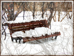 Life of a banch (Only time heals wounds) Tags: jardinbotaniquedemontréal garden snowstorm snow white frame nature jardin trees poetic grandespace beautiful peaceful paisible 20170305lovingyou tempêtedeneige banc banch