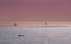 Sail away into the sky (Hanna Tor) Tags: nature landscape art color sky dream sea ocean hannator pink