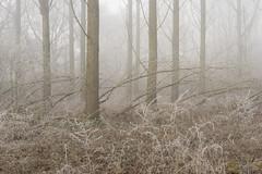 Tide (jellyfire) Tags: forest hoxne landscape landscapephotography sonnartfe55mmf18za sony sonya7r winter atmospheric cold fog frozen hoarfrost leeacaster mist trees woods wwwleeacastercom zeiss