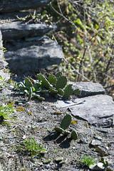Montecrestese - Domodossola - 09.04.17-22 (Maurizio Piazzai) Tags: 090417 altoggio baita cai domodossola montecrestese verbania montagna
