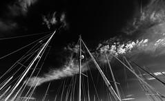 Les mats (Jacques Isner) Tags: herault ciel cloud samyang14mm samyang noiretblanc pentax pentaxart pentaxflickraward pentaxk1 voiliers