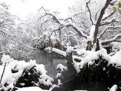 IMG_2841 (sjj62) Tags: s90 snow snowscape lith lakeinthehillsil winter winterscape