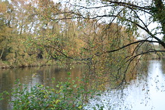 202 (AO'Brien) Tags: arklow autumn wicklow