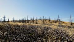 sivár erdő / dreary forest (debreczeniemoke) Tags: autumn mountains landscape land hegy transylvania transilvania táj tájkép gutin erdély ősz szekatura 1430m canonpowershotsx20is gutinhegység secătura munţiigutin