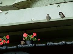 Mettete dei fiori nei vostri cannoni (Marta Marcato) Tags: flowers verde green birds war tank guerra uccelli soldiers fiori militare carroarmato conceptphotos