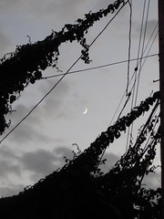 Trying to catch the moon (nobonappetit) Tags: california moon oakland vines