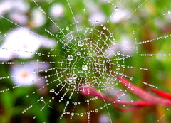 Drip drip drop...misty cobwebs (-Morgane-) Tags: mist macro nature water garden spider drops pearls sparkle cobweb