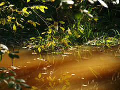 More reflections in a woodland pool (mark.griffin52) Tags: autumn england reflections oxfordshire naturalpond bernwoodforest