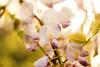 El mes mas bonito del año.... por que es mi cumpleaños!!!!! (Silvina Menna) Tags: flores atardecer rosas lilas glicinas silvinamennafotografia silvinamenna