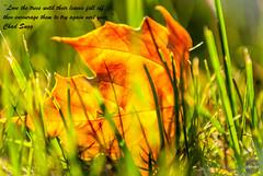 Autumn (Antonio Camelo) Tags: autumn plants october leafs